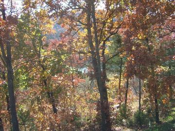 Wooded view of lake from screened-in porch