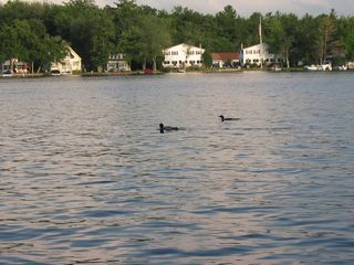 Lake Winnisquam condo photo - You'll Love Listening to the Loons Whistle