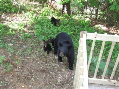 Gatlinburg cabin rental - Bears delight our guests with almost daily visits in Spring, Summer and Fall