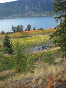 View overlooking Wood/Kalamalka Lakes & our vineyard & neighbours' orchards!