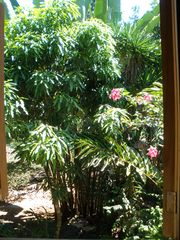 Puerto Viejo house photo - Garden view
