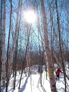 Snow shoeing on a bluebird day!