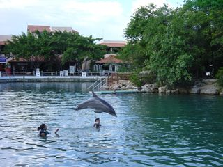 Puerto Aventuras condo photo - Dolphin Discovery - a minute walk from the condo