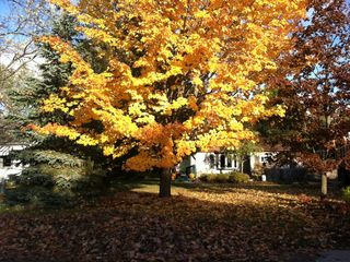 Elk Rapids house rental - A little Autum color on Cedar Street