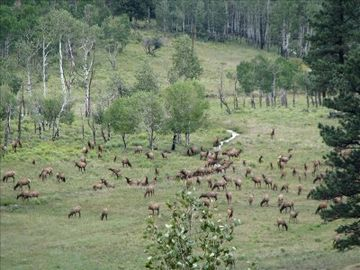 They aren't called the elk meadows without reason. This is just NW of the house.