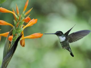 Lago San Pablo villa photo - Ecuador birders paradise! 135 Hummingbird species, Andean Condor, and much more!