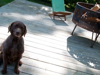 Nashville cottage photo - Our miniature Labradoodle Gibby!
