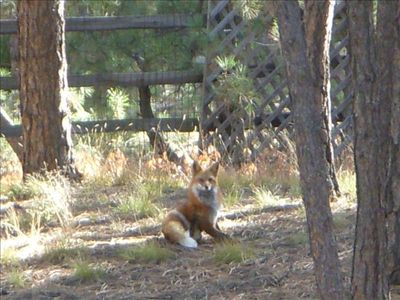 Yes, we do have fox drop in by and by.