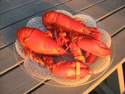 If you love lobster, cook and eat it  fresh right here while watching the sunset