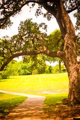 Austin apartment photo - hike the trail just out the back door