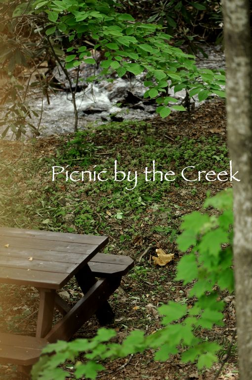 Picnic by the creek