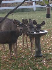 Ouray house photo - neighbors....