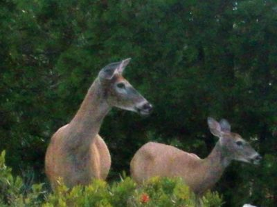 "Regular Visitors to the grounds of ""The Acadia"""
