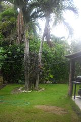 Sosua townhome photo - back yard