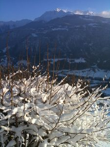 Falera chalet rental - Our lilac in winter