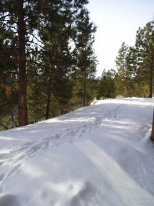 Surrounded by the beautiful pine, Ski out the back door!