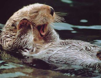 We see otters from our decks swimming and playing with their young.