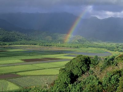 Rainbow at Hanalei Taro fields