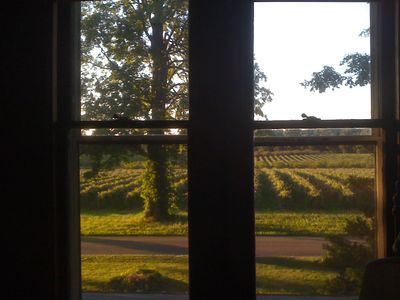 View of the Grape Arbors with Cherry Orchards in the back ground.