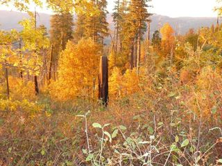 Crestview condo photo - Beautiful autumn in Park City