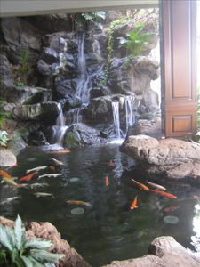 Waterfall in lobby with koi pond
