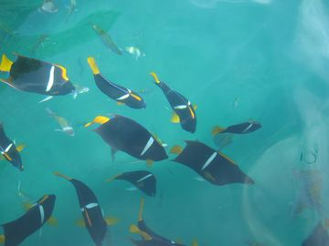 Snorkeling is fantastic in Mismaloya!! Take a boat ride to Los Arcos!!