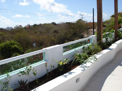 Rooftop terrace planter (plants much fuller and with flowers since this picture)