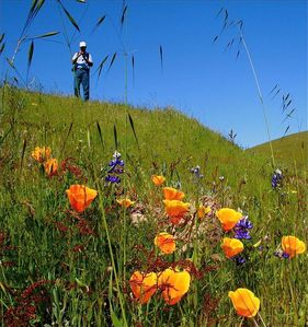 Spring wIldflowers on Pine Canyon Ranch.
