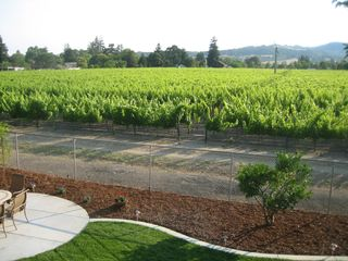 Napa house photo - Afternoon view of vineyard with the Mayacamas Range to the west