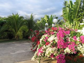 Negril villa photo - Flower garden