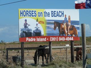 North Padre Island condo photo - Horseback riding nearby.