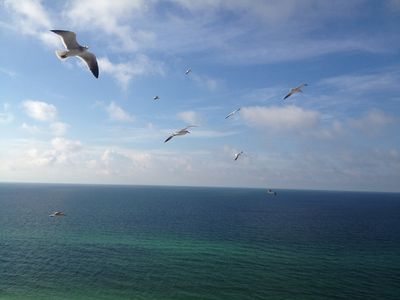 Watch the Seagulls at eye level from your balcony.