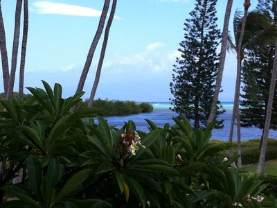 view from our lanai...'I love these plumeria trees, don't you?'