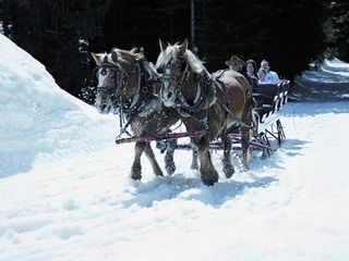 Government Camp condo photo - Sleigh Rides with Mt. Hood Adventure