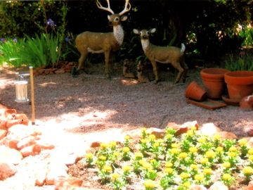 Spring - deer - back yard