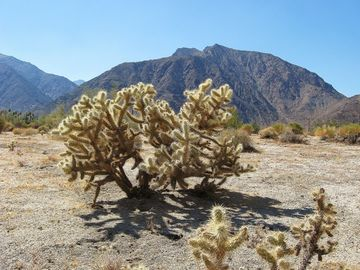 Hacienda's Cholla Cactus and Indian Head Mountain.