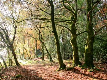 Autumn in Clonrush wood Sensational Colours and heaps of Fresh Air