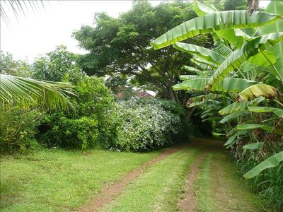 Your own private driveway lined w/ banana and coconut trees.