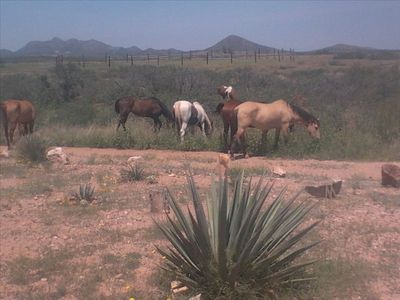 A few of the horses at JP Ranch