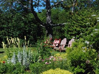 Southwest Harbor cottage photo - Relaxing garden