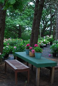 You overlook the Hydrangea Farm plant Nursery