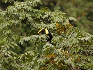 Toucan - Manuel Antonio villa vacation rental photo