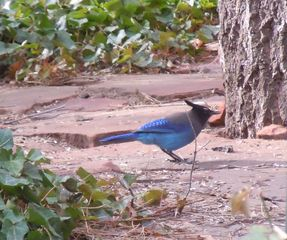 Sedona cabin photo - These beautiful birds grace the area around the bird feeders.
