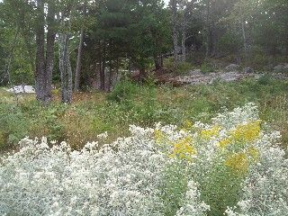 Granite Outcroppings and Flowers on the grounds of The Acadia