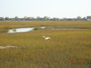 Pawleys Island townhome photo - backyard morning walk Marsh View