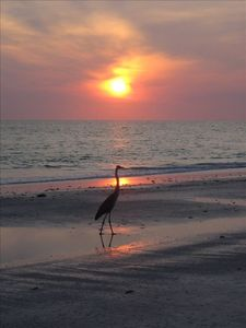 Enjoy fabulous sunsets on the Gulf