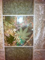 Marshall studio photo - Beautiful custom glass tile in the bathroom
