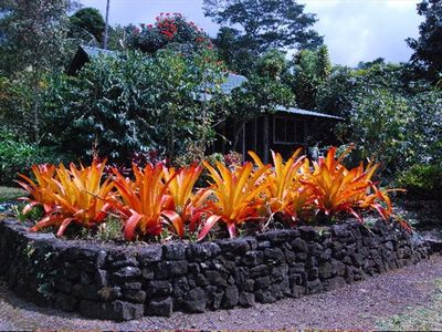 Cottage, coffee trees and tropical gardens