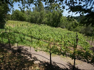 Vineyard in the Backyard near Bocce Court