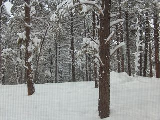 Pagosa Springs cabin photo - Winter wonderland